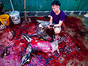01 SEPTEMBER 2017 - BANGKOK, THAILAND: A man butchers a just sacrificed ram during the Qurbani (ritual sacrifice of livestock) at the celebration of Eid al-Adha at Haroon Mosque in Bangkok. Eid al-Adha is also called the Feast of Sacrifice, the Greater Eid or Baqar-Eid. It honours the willingness of Abraham to sacrifice his son. Goats, sheep and cows are sacrificed in a ritualistic manner after services in the mosque. The meat from the sacrificed animal is supposed to be divided into three parts. The family retains one third of the share; another third is given to relatives, friends and neighbors; and the remaining third is given to the poor and needy.     PHOTO BY JACK KURTZ