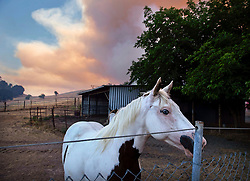 A horse looks on in his pasture near where the County Fire burns in Yolo County, CA, USA on Saturday, June, 30, 2018. Photo by Daniel Kim/Sacramento Bee/TNS/ABACAPRESS.COM