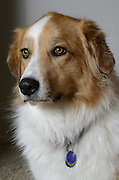 Lucy, beauty queen of a cross-breed.