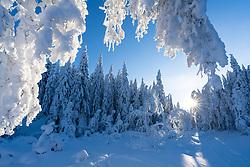 Winter forest in Krokskogen, Viken, Norway