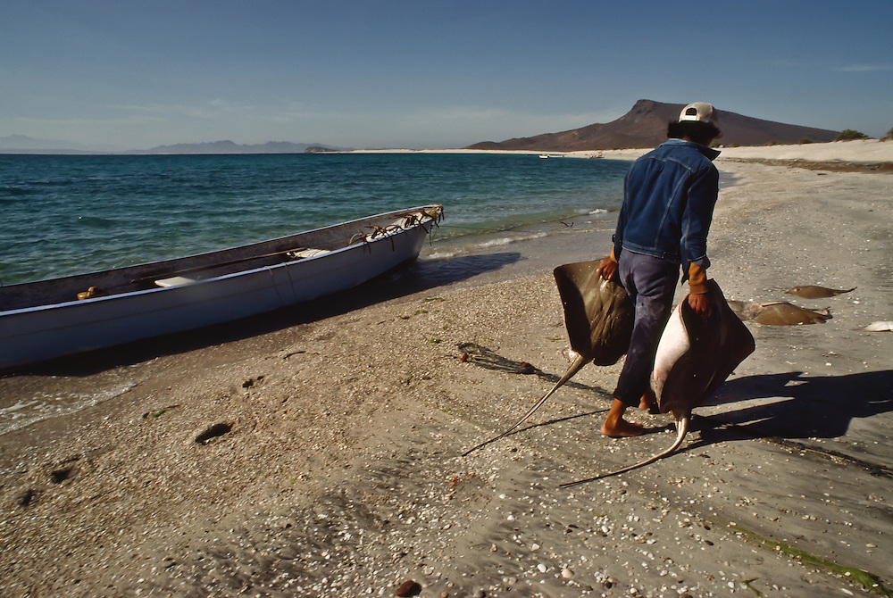A fisherman carries freshly caught rays down the beach in Baja California.