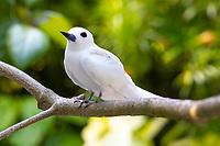 White Tern 2