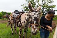 The Kalaupapa Guided Mule Ride on the island of Molokai, Hawaii, USA