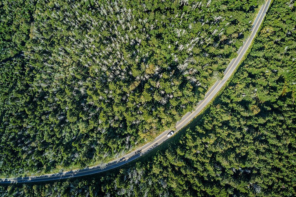 The red spruce (Picea rubens Sarg.) and Fraser fir (Abies fraseri (Pursh) Poir.) forest