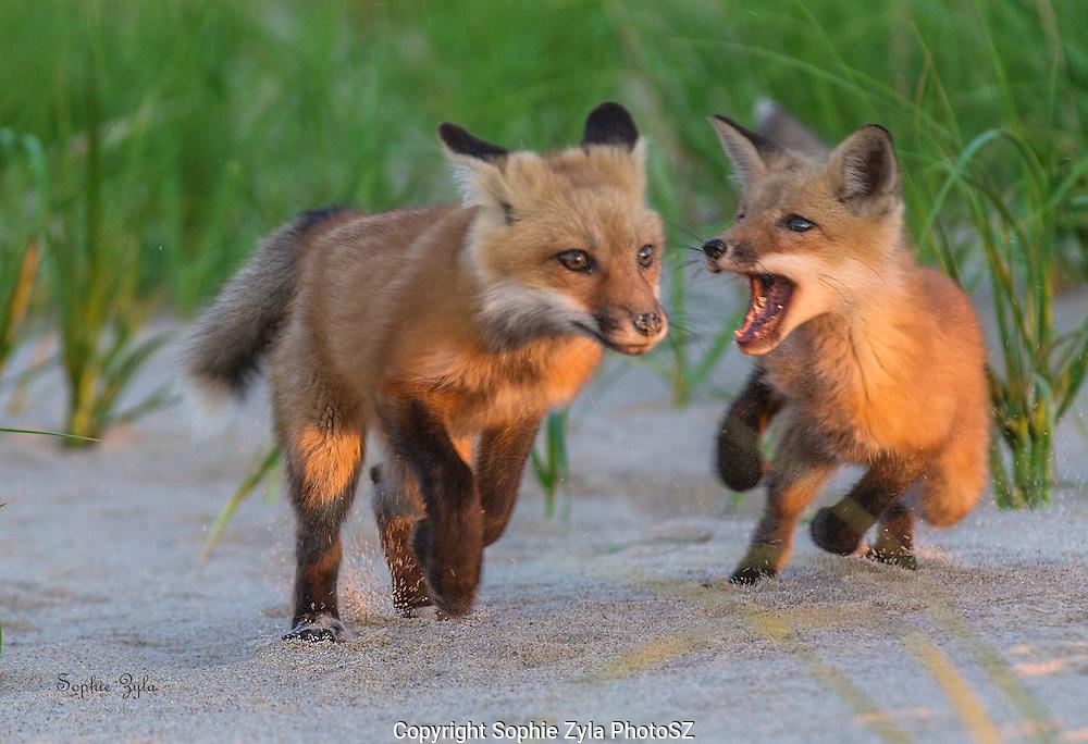 Chasing Mom