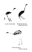 Bushmen (san) rock painting of Cranes and Ostrich painted on the walls of caves From the book '  Specimens of Bushman folklore ' by Bleek, W. H. I. (Wilhelm Heinrich Immanuel), Lloyd, Lucy Catherine, Theal, George McCall, 1837-1919 Published in London by  G. Allen & Company, ltd. in 1911. The San peoples (also Saan), or Bushmen, are members of various Khoe, Tuu, or Kx'a-speaking indigenous hunter-gatherer groups that are the first nations of Southern Africa, and whose territories span Botswana, Namibia, Angola, Zambia, Zimbabwe, Lesotho and South Africa.