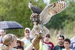 Raptor Show by Last Chance Forever rehabilitation center, Mitchell Lake Audubon Center, San Antonio, Texas, USA.