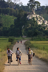 Secondary school students on their way home through the rice fields close to Phangthong Village through the rice fields, Pha Oudom District, Bokeo Province, Lao PDR