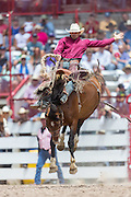 Bareback rider Isaac Diaz hangs on to win the Bareback Championships at the Cheyenne Frontier Days rodeo in Frontier Park Arena July 26, 2015 in Cheyenne, Wyoming. Frontier Days celebrates the cowboy traditions of the west with a rodeo, parade and fair.