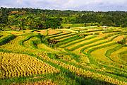 Jatiluwih Rice Terrace (UNESCO World Heritage Site), Bali, Indonesia