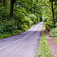 A secondary road runs through the woods in the Lake District, UK