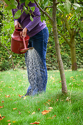 Watering Nemasys Grow Your Own  nematodes onto the trunk of an apple tree to protect from pests
