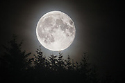 Full moon over tree tops | Fullmåne over tred topper