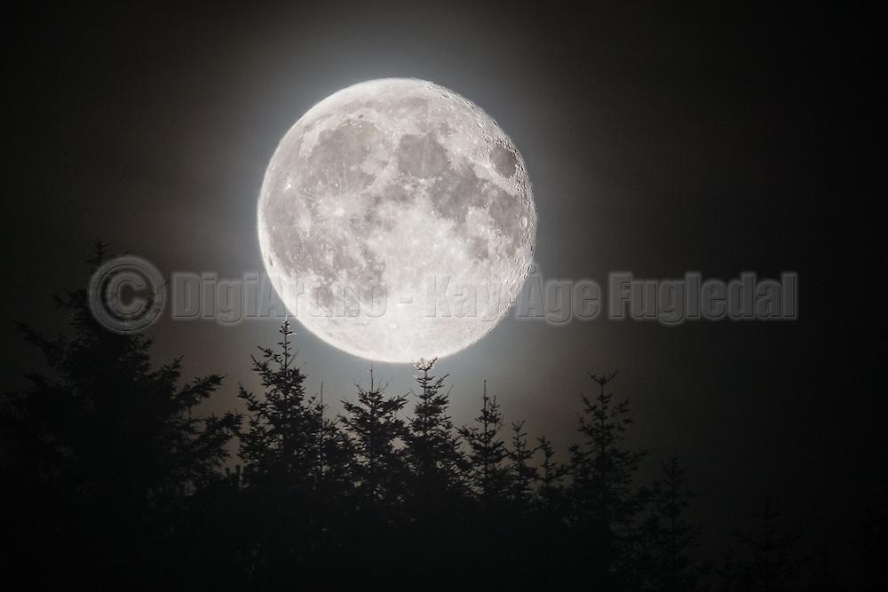 Full moon over tree tops   Fullmåne over tred topper