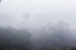 View of cloud forest from Sky Walk at Costa Rican Adventures park near Monteverde Cloud Forest Preserve, Costa Rica. Captive.