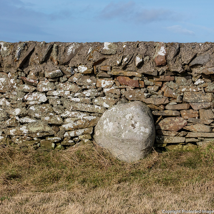 Field boundary near the Isle of Whithorn, Dumfries and Galloway, Scotland.