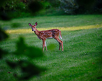 Alpha fawn -- I didn't do anything wrong. Image taken with a Fuji X-T3 camera and 200 mm f/2 lens