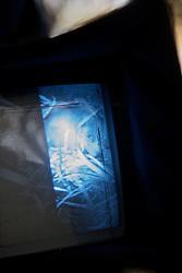 Camera Showing Leadbeater's Possum in Nest Box