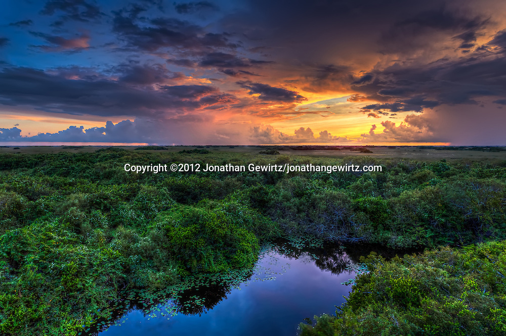 Distant showers lit by the setting sun provide a glorious backdrop to the alligator pond and surrounding vegetation near the Shark Valley observation tower in Everglades National Park, Florida. <br /> <br /> WATERMARKS WILL NOT APPEAR ON PRINTS OR LICENSED IMAGES.<br /> <br /> Licensing: https://tandemstock.com/assets/17482851