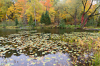 Near the center of town in Presque Isle, Wisconsin, lies a small park on Little Horsehead Lake. I loved the variety of colors in the trees surrounding the lake.<br /> <br /> Date Taken: September 30 2014