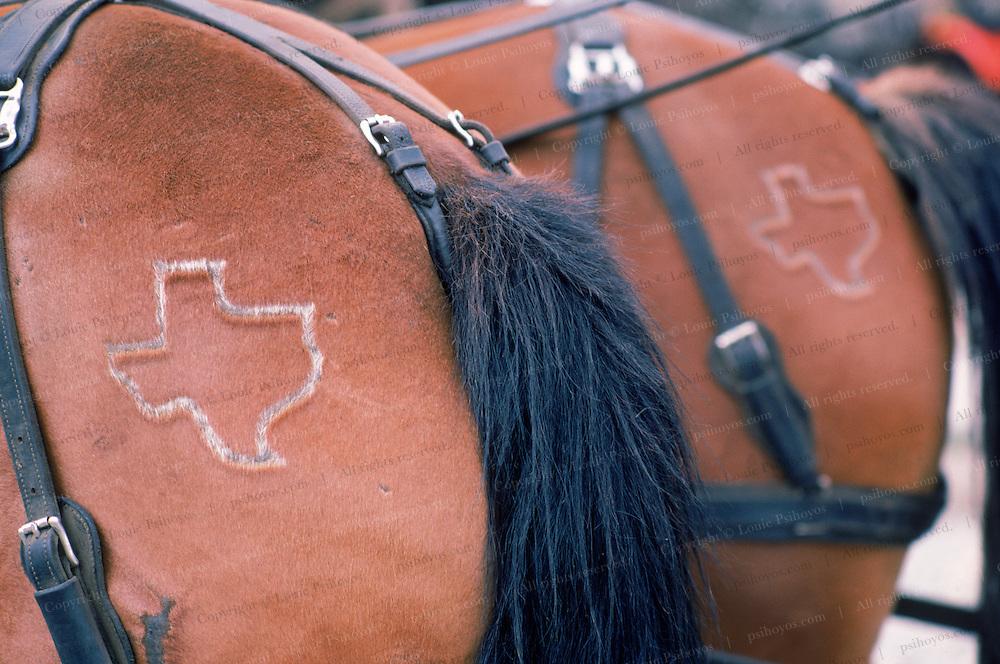 Branded horses in Silverton Colorado.