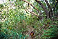 A dog runs down Pine Ridge Trail, Big Sur, California.