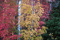 Utah's Alpine Loop provides numerous views of the colorful variety of leaves you can find in the Wasatch Mountains.