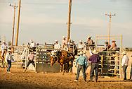 Will James Roundup, Ranch Rodeo, Ranch Bronc Riding, Hardin, Montana