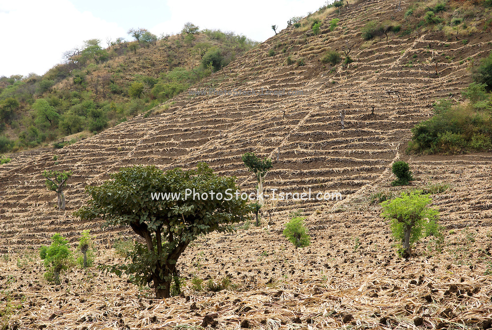 Africa, Ethiopia, Omo region, ploughed fields on a mountain side