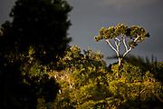 Porto Seguro_BA, Brasil...Mata Atlantica em Porto Seguro, Bahia...The Brazilian Atlantic Forest in Porto Seguro, Bahia...Foto: JOAO MARCOS ROSA / NITRO