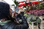 A woman taking a photo of hydrangea flowers using a mobile phone at Columbia Road Flower Market on the 6th October 2019 in London in the United Kingdom. Columbia Road Flower Market is a street market in Bethnal Green in Hackney, London. The market is open on Sundays only.