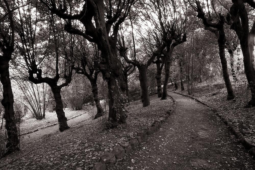 Wooded path, Boboli Gardens