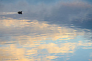 Light ripples were coming across the water as I watched the reflections of the clouds and sky pass when I noticed a coot moving into the scene.  Its silhouete created a nice ankor to the scene.
