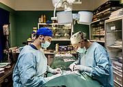 Oristano, Clinica Veterinaria due Mari, la dott.ssa Pais durante un intervento chirurgico