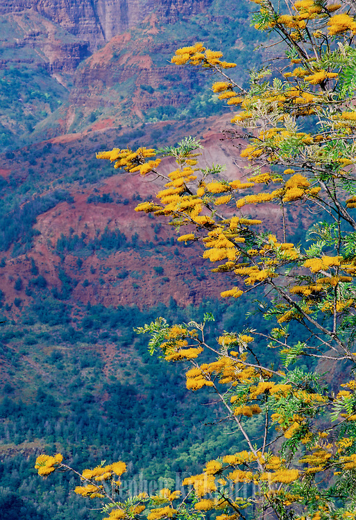 """Waimea Canyon is called the """"Grand Canyon of the Pacific"""". It's beautiful colors of rock and flora adorn this part of Kauai."""