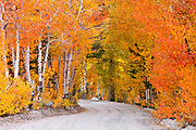 Fall color along the North Lake road, Inyo National Forest, Sierra Nevada Mountains, California USA