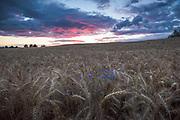 Photo by Davis Ulands | davisulands.com