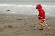 A toddler carries driftwood along the beach near Crescent City, California