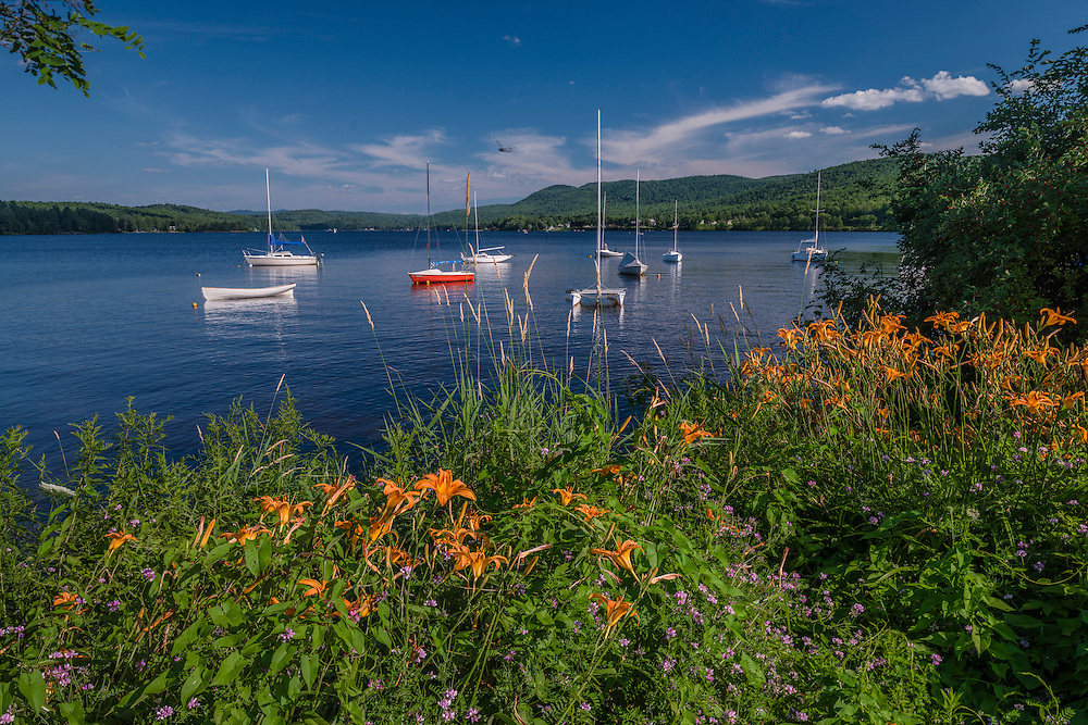Daylilies on shore of Mascoma Lake, with sailboats moored in summer, Enfield, NH