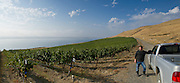 Peter Devison, Alder Ridge Vineyards, Horse Heaven Hills, Washington