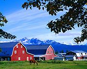 Goat Mountain and Twin Peaks of the Chugach Mountains beyond twin barns on the Gislason farm, Matanuska Valley, Alaska.