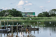 June 30, 2014 - Budel, Noord-Brabant, Netherlands - Birds fly close to a -Ringselven- lake shore in the Dutch Noord-Brabant province. (Credit Image: © Vedat Xhymshiti/ZUMA Wire)