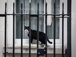 © Licensed to London News Pictures. 02/08/2016. London, UK. Palmerston, the cat belonging to the Foreign and Commonwealth Office, peers through a window to 11 Downing Street. Palmerston and Larry, the Prime Minister's cat, have been seen fighting in recent weeks, and an animal charity has reportedly been called in to arbitrate the dispute. Photo credit: Rob Pinney/LNP