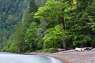 Winds blow the tree branches on the beach at Cameron Lake near Port Alberni, British Columbia, Canada