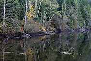 Reflections in the water of Buntzen Lake in the fall.  Photographed from the floating bridge at the south end of Buntzen Lake near Anmore, British Columbia, Canada.