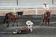 Young Luis Alfonso Franco unties a rope from a steer during Terna en el Ruedo or team roping at the family Charreria practice session in the Jalisco Highlands town of Capilla de Guadalupe, Mexico. The Franco family has dominated Mexican rodeo for 40-years and has won three national championships, five second places and five third places.