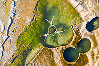Aerial view of  group floating at figure eight pools at Sydney's Royal National Park, Australia.