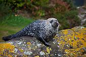 Irish Nature & Wildlife