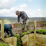 Two gamekeepers turfing a new grouse shooting butt on Bransdale Moor, North York Moors, North Yorkshire, UK