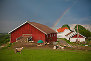 The sheep barns and farmhouses of fhe Glad Ostensen family in Gjerdrum, Norway.